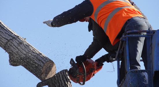 Abattage d'un arbre : Un particulier peut-il le faire