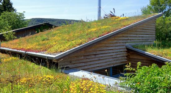 4 avantages principaux d'une toiture végétalisée