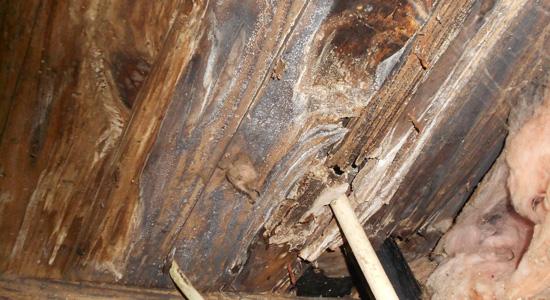 Détecter les infiltrations sous la toiture