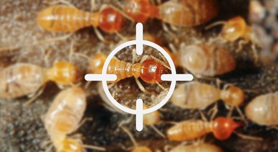 Le diagnostic termites est-il obligatoire ?