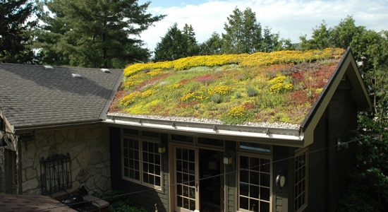Pourquoi ne pas envisager la toiture végétalisée