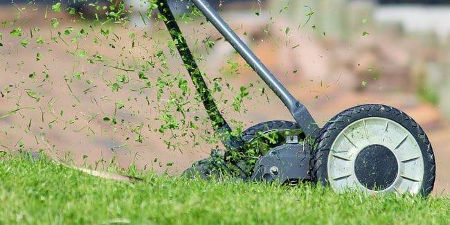 10 erreurs à éviter pour l'entretien de son jardin