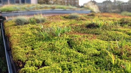 L'étanchéité d'une toiture végétalisée : un cas à part