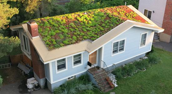 3 inconvénients d'une toiture végétalisée