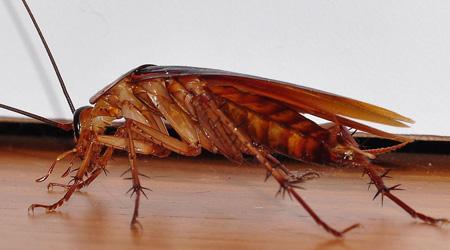 Quels insectes sont-ils les plus à craindre