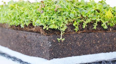 La pose d'une toiture végétalisée