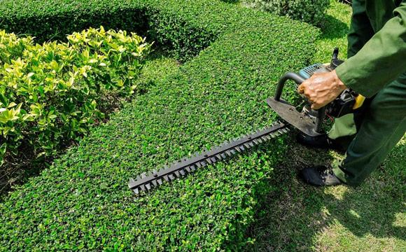 Interventions au forfait pour un jardinier