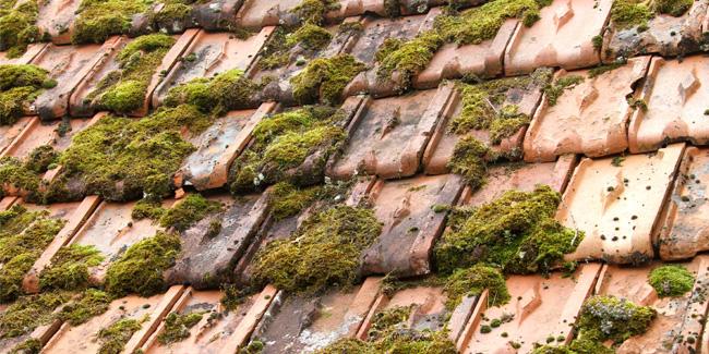 L'ultime guide du nettoyage de votre toiture maison