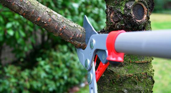 Existe-il une période pour élaguer les arbres