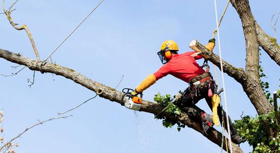 Pourquoi faire appel à un professionnel pour élaguer ses arbres