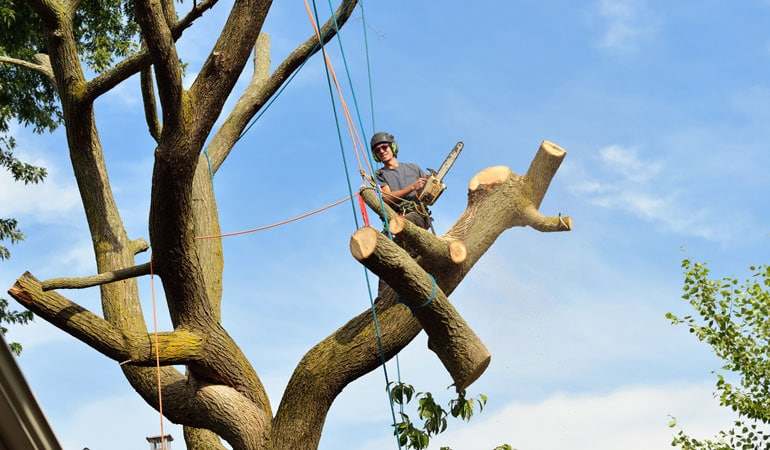 Prix d'un abattage d'arbre par démontage
