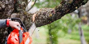 Prix d'un abattage d'arbre