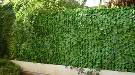 Prix clôture végétale