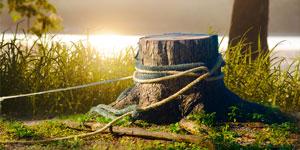 Prix d'un dessouchage d'arbre