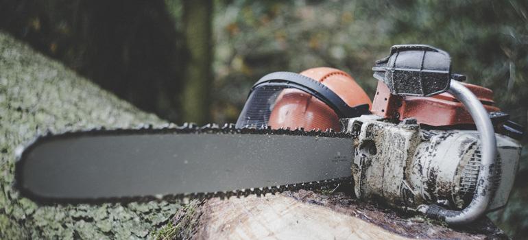 Quand et pourquoi décider de l'abattage d'un arbre