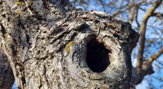 Quelles sont les raisons qui motivent l'abattage d'un arbre