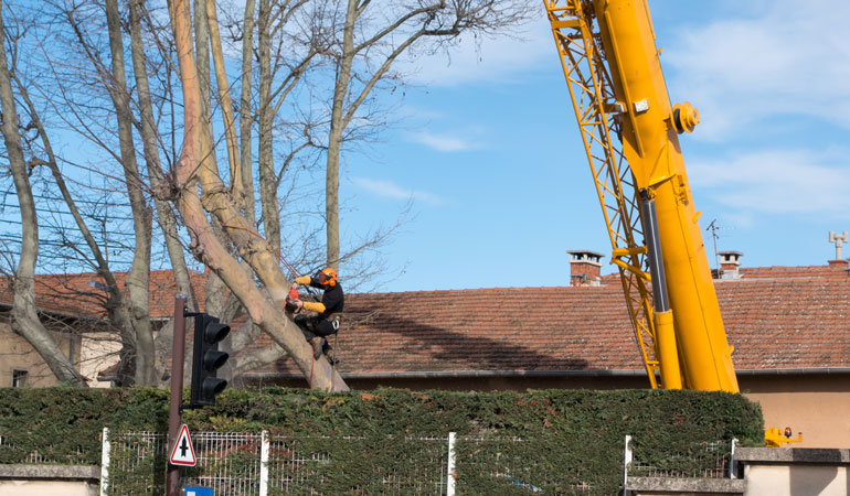 Réalisation d'un abattage d'arbre : L'intervention d'un professionnel