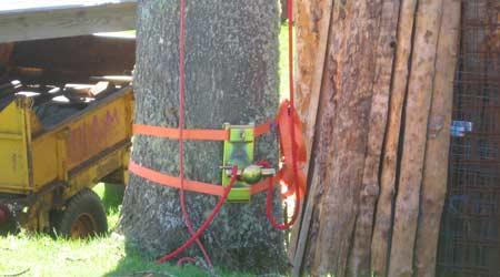 Règlementation de l'abattage d'un arbre