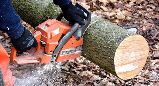 Existe-il une saison idéale pour réaliser l'abattage d'un arbre