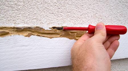 Prix d'un diagnostic termites