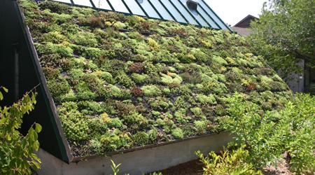 Tarif d'une toiture végétalisée