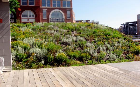 La toiture végétalisée pour un toit 100% écolo